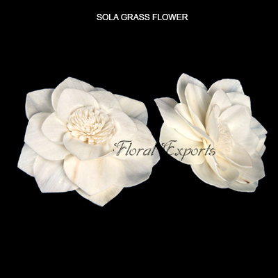 Sola Grass Flowers Type 2