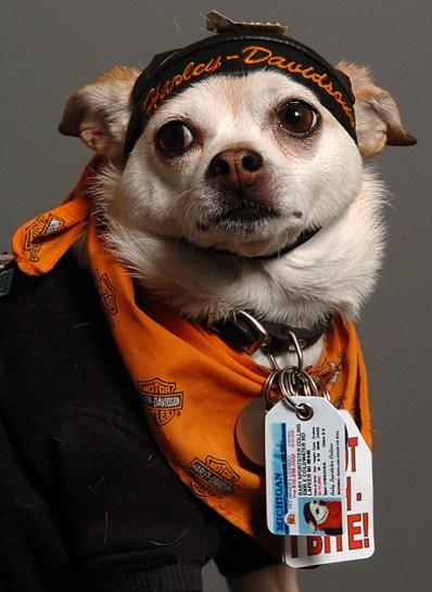 hond13