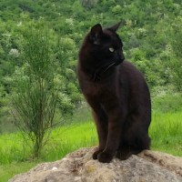 Six Word Story: Superstition