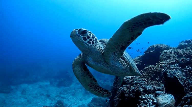 小琉球-海龜