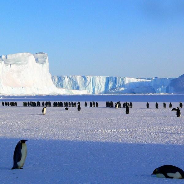 animals antarctic antarctica