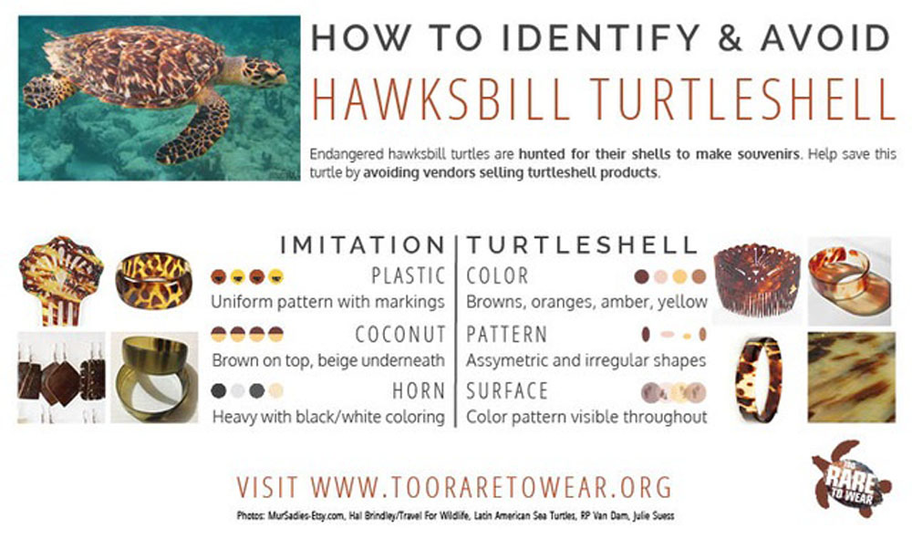 How to identify turtle shell jewellery