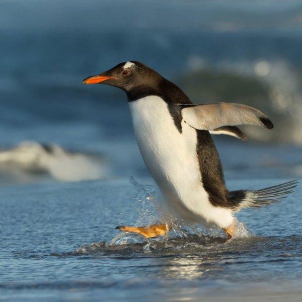 Drifters Guide Antarctica Falklands Experience Tour