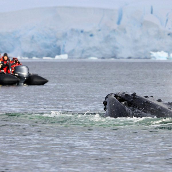 Drifters Guide Antarctica Deception Expedition Cruise