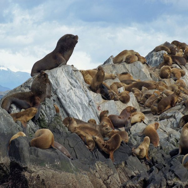 Drifters Guide Ushuaia Argentina Experience Tour