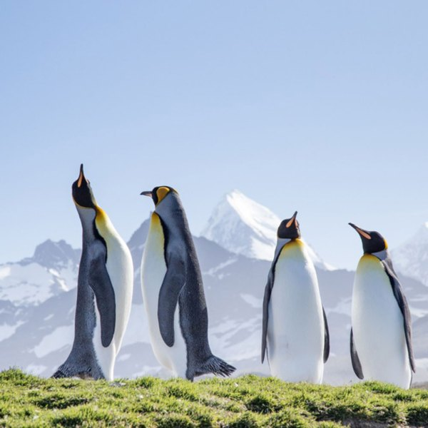 Drifters Guide Antarctica Helicopter Penguin Experience Tour