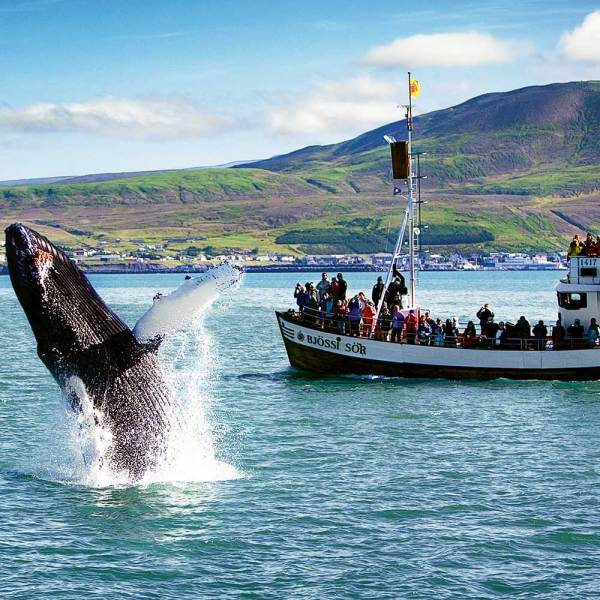 Drifter's Guide to the Planet - Iceland Husavik Whale Watching