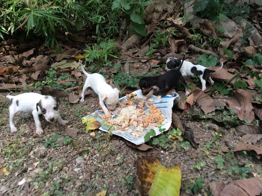 volunteer with animals in jamaica