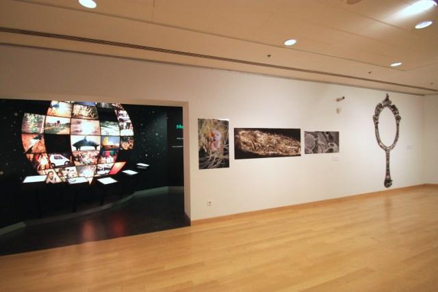 Robert Simmons photos with Longobardi Sappho's Mirror III