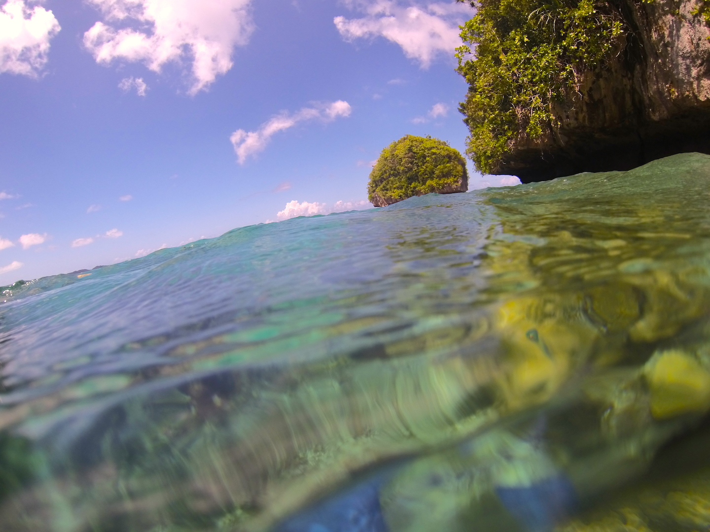 A living fossil~ Palau forges new models for human relationships