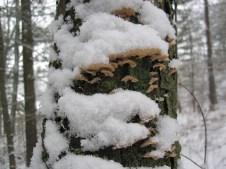Snowy fungi!