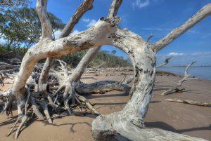 driftwood beach-the boneyard