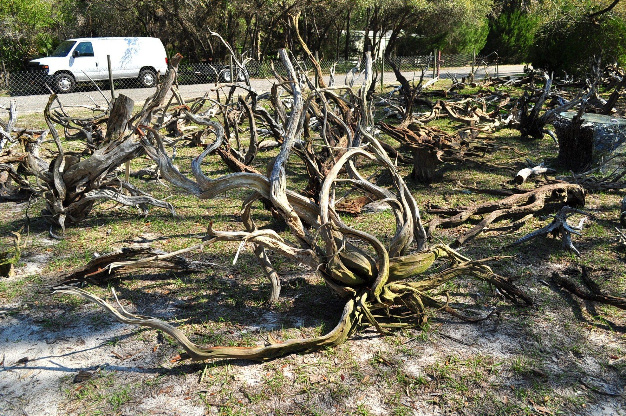 You can never have too much driftwood