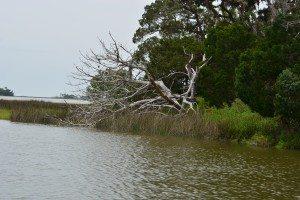 driftwood island 010