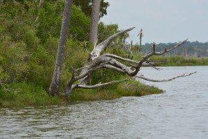 driftwood island 006