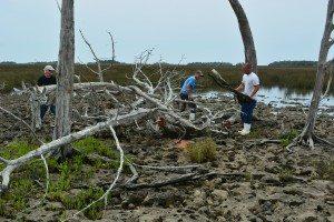 driftwood island 028