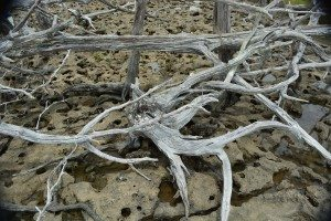 driftwood island 033