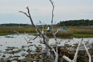 driftwood island 044