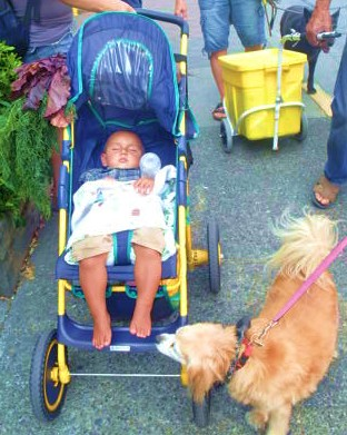 Dog day afternoon in the market