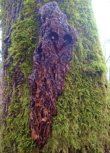 Bark Owl. Some twist makes these wooden owls and attaches them randomly throughout the forest. They're quite startling at first glance,