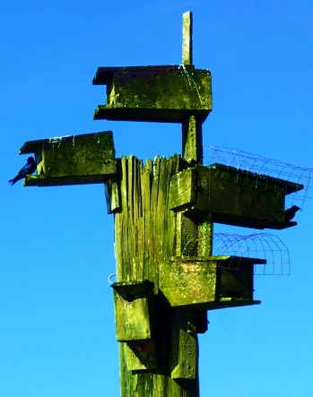 Waterfront Condo. Purple Martins in the nesting boxes.