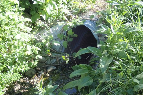 Wyatt's Culvert Where dogs, fools and dog-lovers crawl right on in!