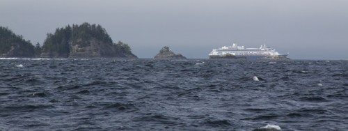 """A cruise ship in Queen Charlotte Strait. One salmon says to the other, """"Look at all the canned people!"""""""