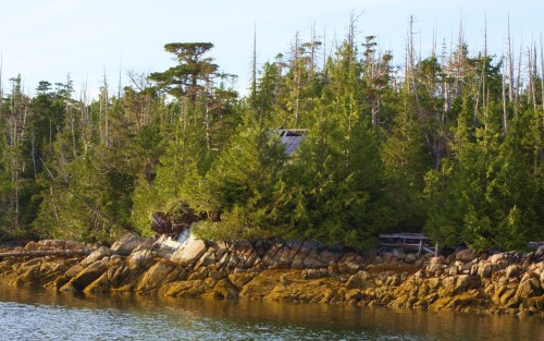 The Seaweed Camp Thick, tangled, inpenetrable. Much of the Great Bear Rain forest is covered with decadent jungle. A wonderful; eco-system and fortunately of insufficient quality to harvest and haul away.