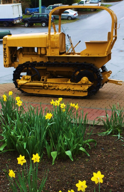 A Caterpillar among the daffodils. Mainstreet Ladysmith where kids love to play on old tractors.