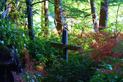 It is hard to guess how many graves there are. The forest re-claims them rapidly.