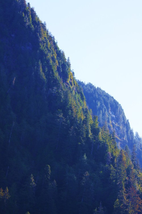 UP! Near vertical mountains with massive timber growing to the sky. Imagine how tiny one would feel paddling in the waters beneath looking for a place to make your mark.