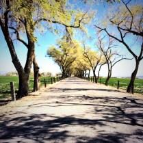Churchill Vineyards driveway