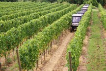 A tour of the Montevibiano Wine Estate
