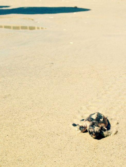 Jensen Beach Turtles