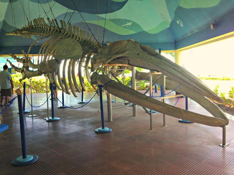 Whale remains at National Aquarium Santo Domingo