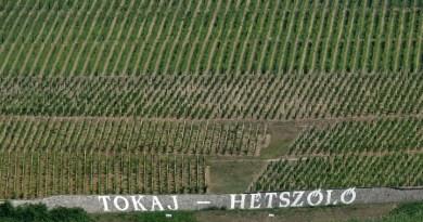 Tokaj, podgoria unde erai amendat pentru o înjurătură