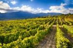 Можно ли поднять престиж крымских вин?