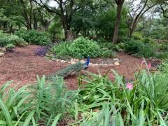 Mayfield Park in Austin