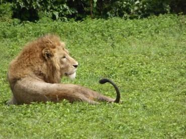 safari nel serengeti