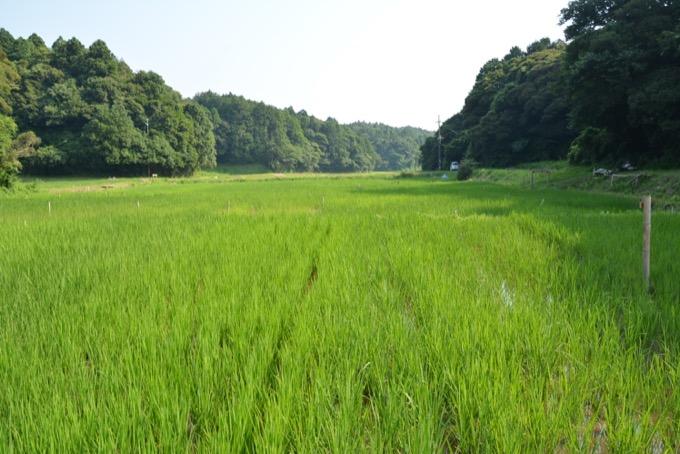 SOSA project田園風景