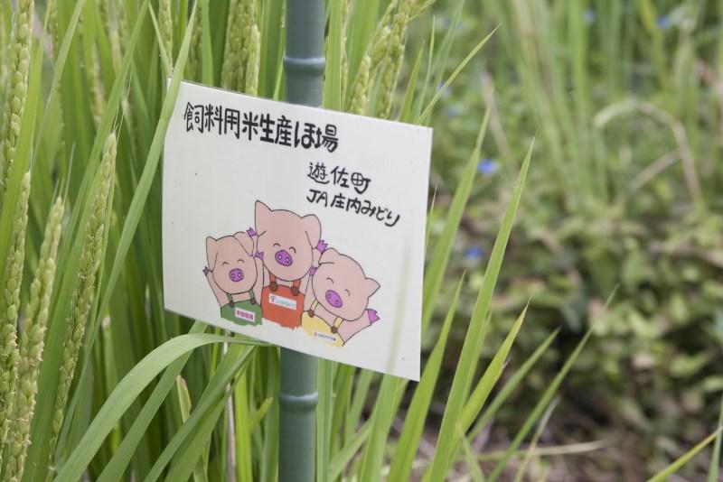 お米を育てる現場