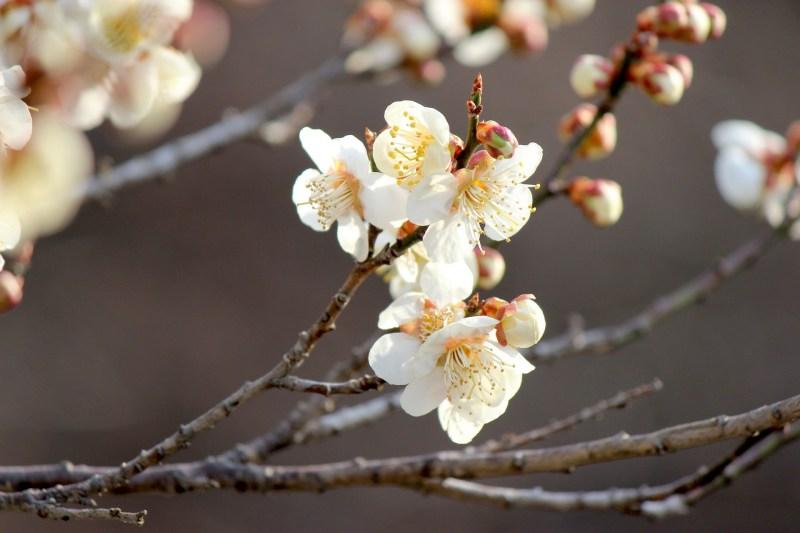 311から6年。改めて振り返りたい、私たちに東日本大震災が与えた影響と教訓