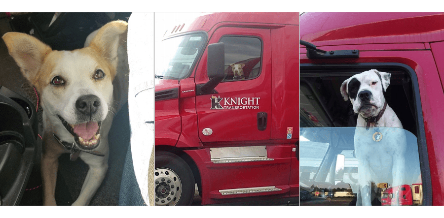 Knight Transportation Pet Policy