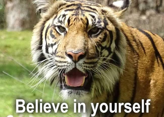 Believe in yourself - Copyright: Xzelenz Media