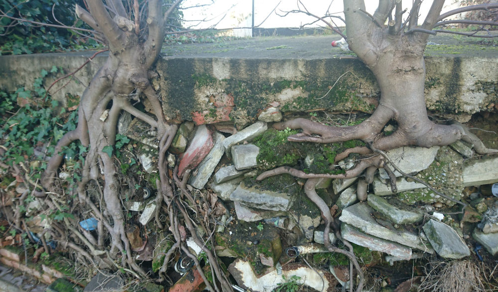 driveways-and-tree-roots