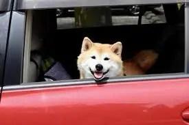 犬連れドライブ