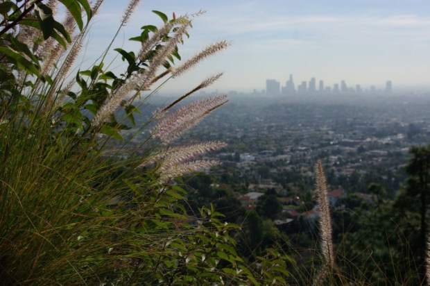 Downtown from one of the many trails that start/end at the observatory.