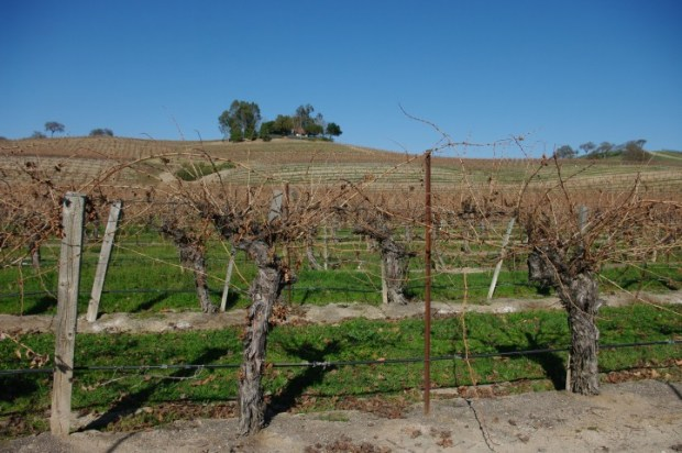 The Paso Robles countryside.