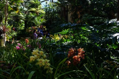 More orchids.