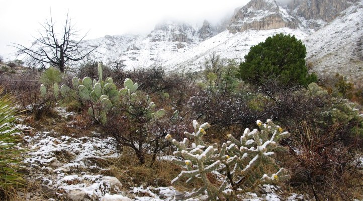 Guadalupe National Park: An Unknown National Park